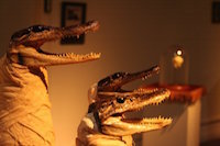 three taxidermy alligator heads with a body wrapped like a mummy.