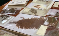 large collection of pressed botanicals