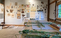 View of Honeycutt's studio, collage of botanicals and sketches pinned to the wall