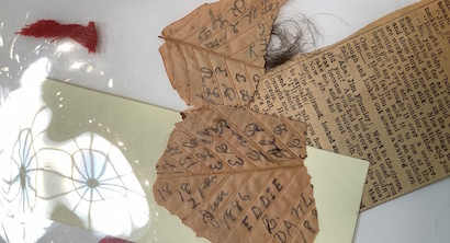 AAS botanical collection. Numbers, names and letters etched in pencil on pressed leaves, a small clump of human hair, and a cut-out newspaper article