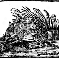 Woodcut for The Frog and mouse, or The frog he would a wooing go