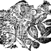 Woodcut for The Exile's return, : together with Delia and the Rose