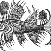 Woodcut for The Death of the embargo