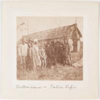 Cotton scene - cabin life