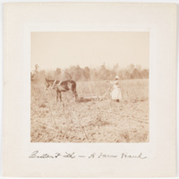 Cotton field - a farm hand